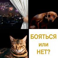Ваша собака боится петард и салюта? Что делать, чтобы Новый Год не стал проблемой для питомца?